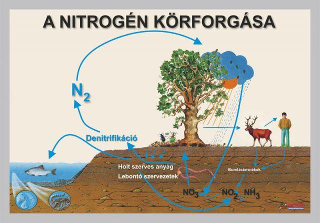 A nitrogén körforgása és vegyületei